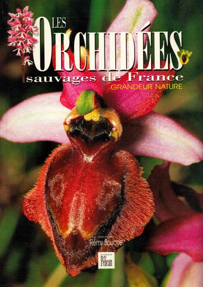 043 les orchid es sauvages de france. Black Bedroom Furniture Sets. Home Design Ideas